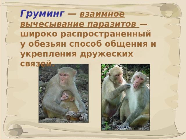 Груминг —  взаимное вычесывание паразитов — широко распространенный уобезьян способ общения и укрепления дружеских связей.  41 41