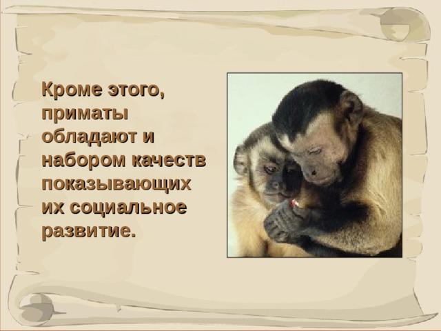 Кроме этого, приматы обладают и набором качеств показывающих их социальное развитие. Люди - не единственный вид, который обладает способностью оценивать справедливость.  К таким выводам пришли американские ученые, исследуя обезьян капуцинов.  Их исследование показало, что обезьяны капуцины оказывается способны требовать свою часть продовольствия или награды за решение задач, которые они сделали, и не будут соглашаться на несправедливую, по их мнению, подачку, прекрасно осознавая, что были обмануты.  41 41