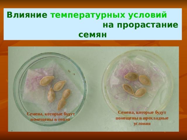 Влияние температурных условий на прорастание семян Семена, которые будут помещены в прохладные условия Семена, которые будут помещены в тепло