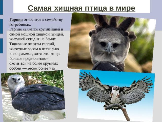 Самая хищная птица в мире Гарпия относится к семейству ястребиных. Гарпия является крупнейшей и самой мощной хищной птицей, живущей сегодня на Земле. Типичные жертвы гарпий, животные весом в несколько килограммов, хотя эти птицы больше предпочитают охотиться на более крупных особей — весом более 7 кг.