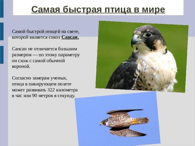 Самая быстрая птица в мире Самой быстрой птицей на свете, которой является сокол Сапсан.  Сапсан не отличается большим размером — по этому параметру он схож с самой обычной вороной. Согласно замерам ученых, птица в пикирующем полете может развивать 322 километра в час или 90 метров в секунду.