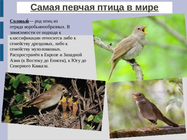 Самая певчая птица в мире Соловьи́ — род птиц из отрядаворобьинообразных. В зависимости от подхода к классификации относится либо к семействудроздовых, либо к семейству мухоловковых. Распространён в Европе и Западной Азии (к Востоку доЕнисея), к Югу до Северного Кавказа.