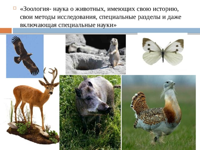 «Зоология- наука о животных, имеющих свою историю, свои методы исследования, специальные разделы и даже включающая специальные науки»