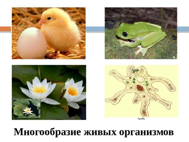 Все живые организмы делятся на две группы: одноклеточные и многоклеточные Многообразие живых организмов