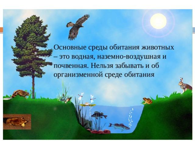 Среды жизни и места обитания Основные среды обитания животных – это водная, наземно-воздушная и почвенная. Нельзя забывать и об организменной среде обитания