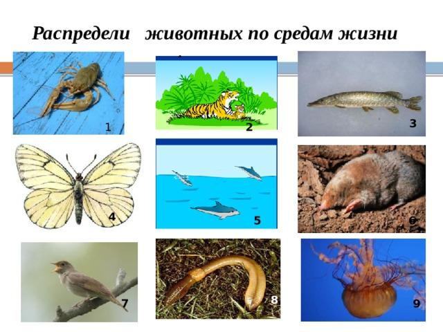 Распредели животных по средам жизни 3 1 2 4 6 5 8 9 7