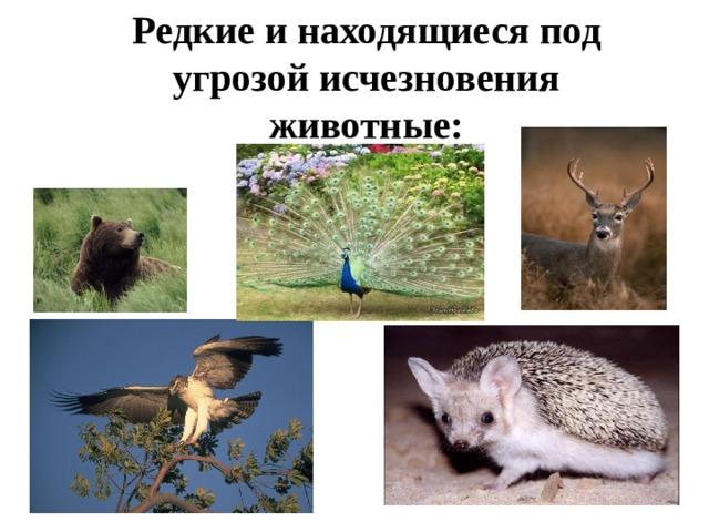 Редкие и находящиеся под угрозой исчезновения животные: