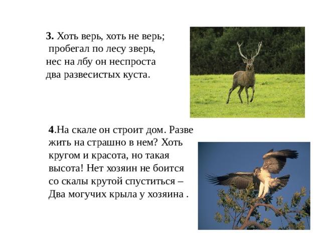 3. Хоть верь, хоть не верь;  пробегал по лесу зверь, нес на лбу он неспроста два развесистых куста.  4 .На скале он строит дом. Разве жить на страшно в нем? Хоть кругом и красота, но такая высота! Нет хозяин не боится со скалы крутой спуститься –Два могучих крыла у хозяина .