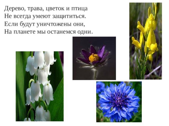 Дерево, трава, цветок и птица Не всегда умеют защититься. Если будут уничтожены они, На планете мы останемся одни .