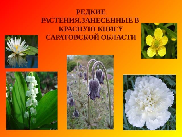 В Красную книгу Саратовской области занесено: 184 вида растений 5 видов грибов 5 видов лишайников 155 видов животных