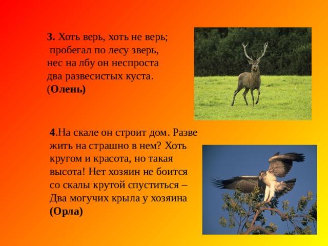 2. Серовато, зубовато, по полю рыщет , телят, ягнят ищет. ( Волк) 2. Серовато, зубовато, по полю рыщет , телят, ягнят ищет. ( Волк) Животные Красной книги - Отгадайте загадки: 1. Хозяин лесной просыпается весной,  а зимой под зимний вой, спит в берлоге под сосной. ( Медведь)