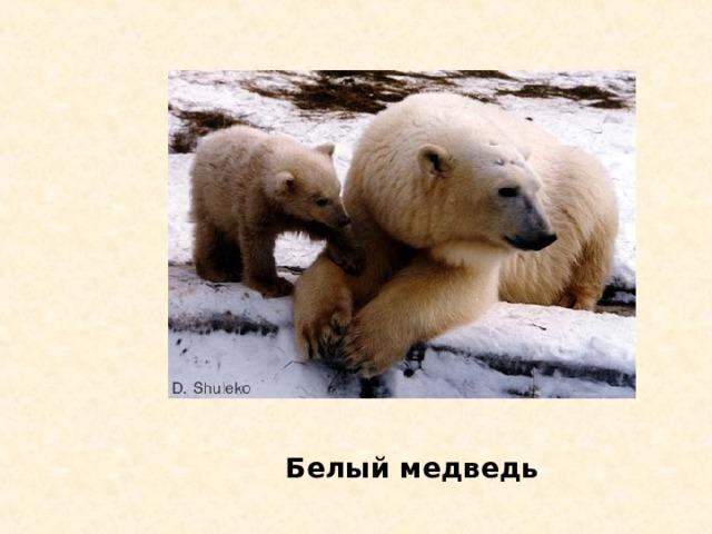 Владыка Арктики с о ? б о л ь