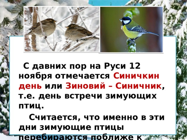 С давних пор на Руси 12 ноября отмечается Синичкин день или Зиновий – Синичник , т.е. день встречи зимующих птиц.  Считается, что именно в эти дни зимующие птицы перебираются поближе к человеку, чтобы получить пропитание.