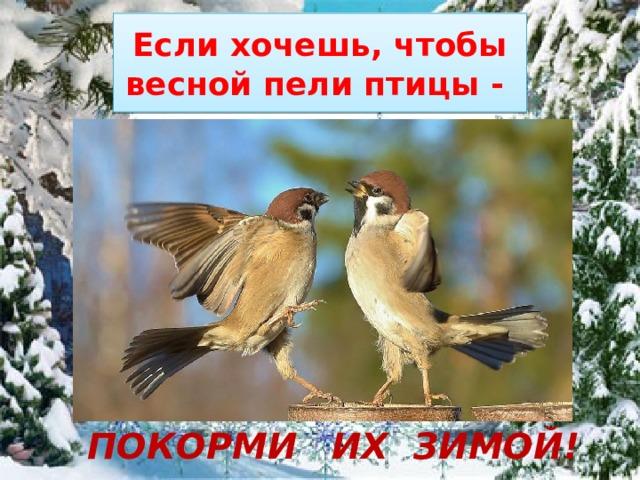 Если хочешь, чтобы весной пели птицы -    ПОКОРМИ  ИХ ЗИМОЙ!