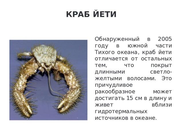 Краб Йети   Обнаруженный в 2005 году в южной части Тихого океана, краб йети отличается от остальных тем, что покрыт длинными светло-желтыми волосами. Это причудливое ракообразное может достигать 15 см в длину и живет вблизи гидротермальных источников в океане.