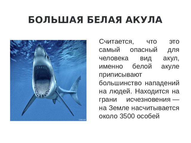 Большая белая акула Считается, что это самый опасный для человека вид акул, именно белой акуле приписывают большинство нападений на людей. Находится на грани исчезновения— на Земле насчитывается около 3500 особей