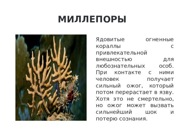 Миллепоры Ядовитые огненные кораллы с привлекательной внешностью для любознательных особ. При контакте с ними человек получает сильный ожог, который потом перерастает в язву. Хотя это не смертельно, но ожог может вызвать сильнейший шок и потерю сознания.