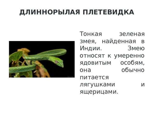Длиннорылая плетевидка   Тонкая зеленая змея, найденная в Индии. Змею относят к умеренно ядовитым особям, она обычно питается лягушками и ящерицами.