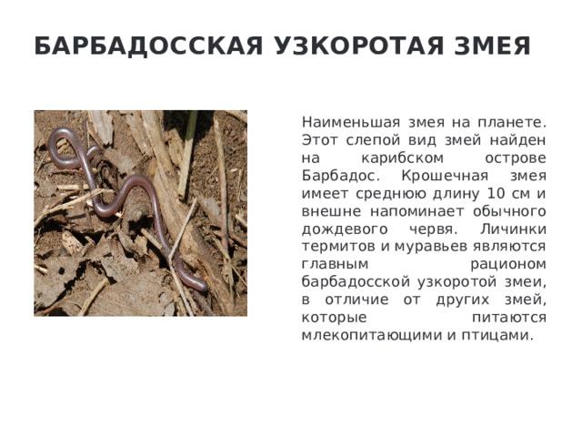 Барбадосская узкоротая змея   Наименьшая змея на планете. Этот слепой вид змей найден на карибском острове Барбадос. Крошечная змея имеет среднюю длину 10 см и внешне напоминает обычного дождевого червя. Личинки термитов и муравьев являются главным рационом барбадосской узкоротой змеи, в отличие от других змей, которые питаются млекопитающими и птицами.