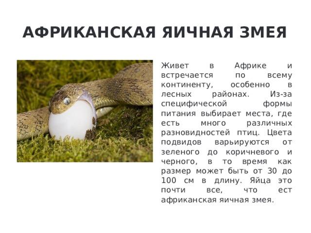 Африканская яичная змея Живет в Африке и встречается по всему континенту, особенно в лесных районах. Из-за специфической формы питания выбирает места, где есть много различных разновидностей птиц. Цвета подвидов варьируются от зеленого до коричневого и черного, в то время как размер может быть от 30 до 100 см в длину. Яйца это почти все, что ест африканская яичная змея.