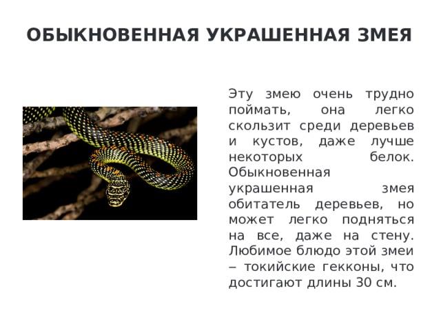 Обыкновенная украшенная змея   Эту змею очень трудно поймать, она легко скользит среди деревьев и кустов, даже лучше некоторых белок. Обыкновенная украшенная змея обитатель деревьев, но может легко подняться на все, даже на стену. Любимое блюдо этой змеи ‒ токийские гекконы, что достигают длины 30 см.