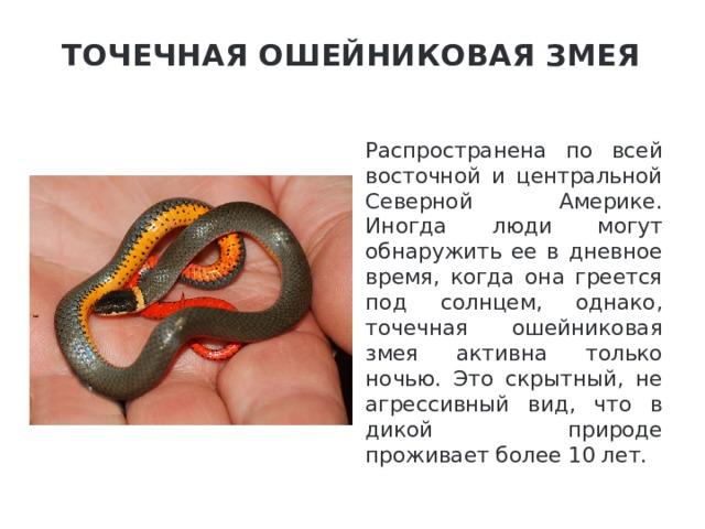 Точечная ошейниковая змея   Распространена по всей восточной и центральной Северной Америке. Иногда люди могут обнаружить ее в дневное время, когда она греется под солнцем, однако, точечная ошейниковая змея активна только ночью. Это скрытный, не агрессивный вид, что в дикой природе проживает более 10 лет.