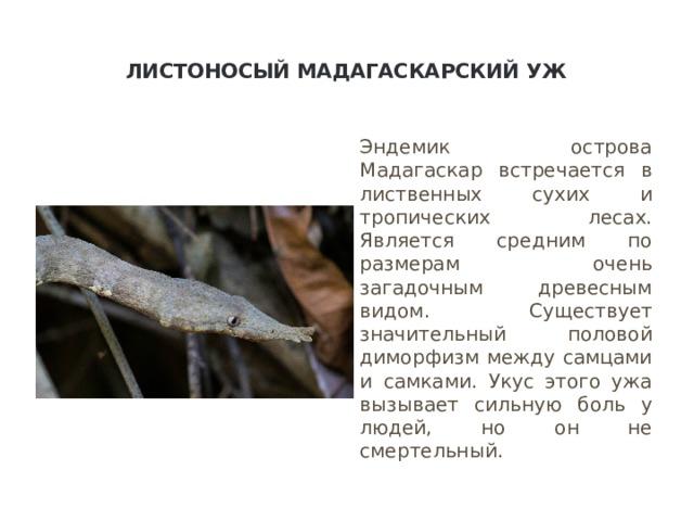 Листоносый мадагаскарский уж   Эндемик острова Мадагаскар встречается в лиственных сухих и тропических лесах. Является средним по размерам очень загадочным древесным видом. Существует значительный половой диморфизм между самцами и самками. Укус этого ужа вызывает сильную боль у людей, но он не смертельный.