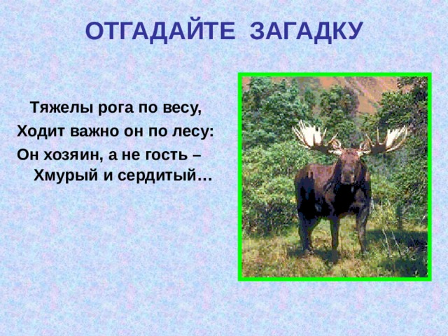 ОТГАДАЙТЕ  ЗАГАДКУ  Тяжелы рога по весу, Ходит важно он по лесу: Он хозяин, а не гость – Хмурый и сердитый…