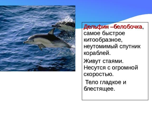Дельфин –белобочка , самое быстрое китообразное, неутомимый спутник кораблей. Живут стаями. Несутся с огромной скоростью.  Тело гладкое и блестящее.