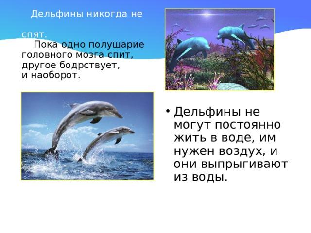 Дельфины никогда не  спят.  Пока одно полушарие  головного мозга спит,  другое бодрствует,  и наоборот.