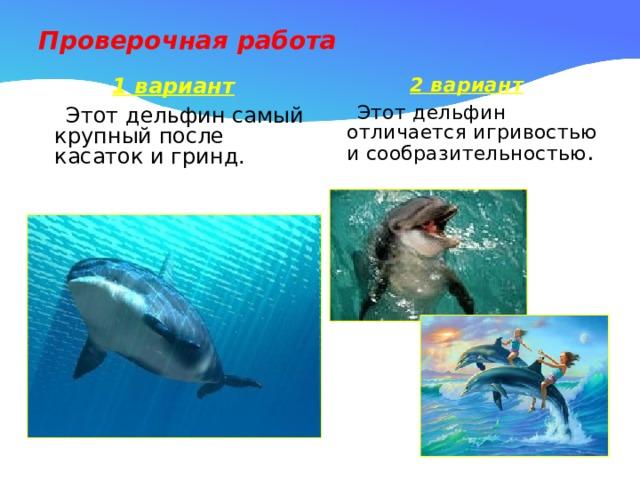 Проверочная работа 1 вариант 2 вариант  Этот дельфин самый крупный после касаток и гринд.  Этот дельфин отличается игривостью и сообразительностью .