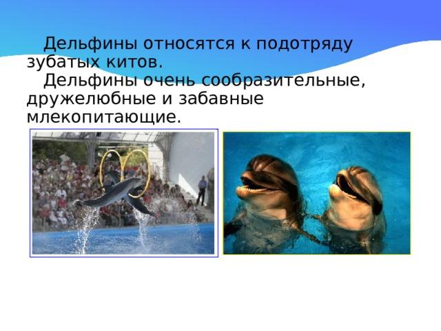 Дельфины относятся к подотряду зубатых китов.  Дельфины очень сообразительные, дружелюбные и забавные млекопитающие.