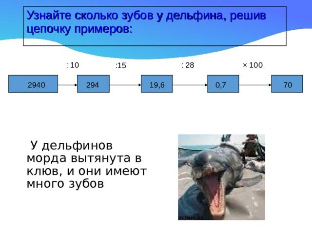 Узнайте сколько зубов у дельфина, решив цепочку примеров: : 10 : 28 × 100 :15 19,6 294 2940 0,7 70  У дельфинов морда вытянута в клюв, и они имеют много зубов