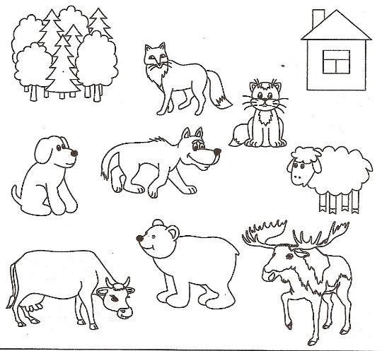 дикие и домашние животные картинки к занятию написали книгу