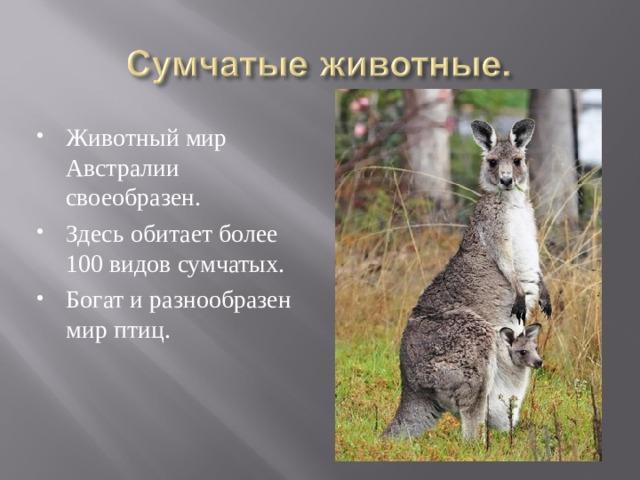 Животный мир Австралии своеобразен. Здесь обитает более 100 видов сумчатых. Богат и разнообразен мир птиц.