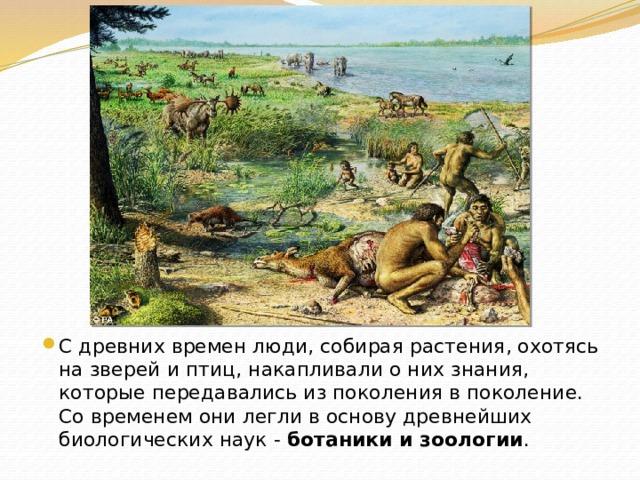 С древних времен люди, собирая растения, охотясь на зверей и птиц, накапливали о них знания, которые передавались из поколения в поколение. Со временем они легли в основу древнейших биологических наук - ботаники и зоологии .