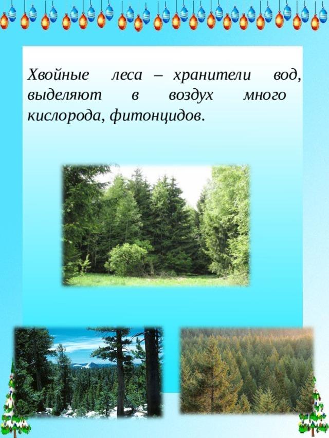 Хвойные леса – хранители вод, выделяют в воздух много кислорода, фитонцидов.