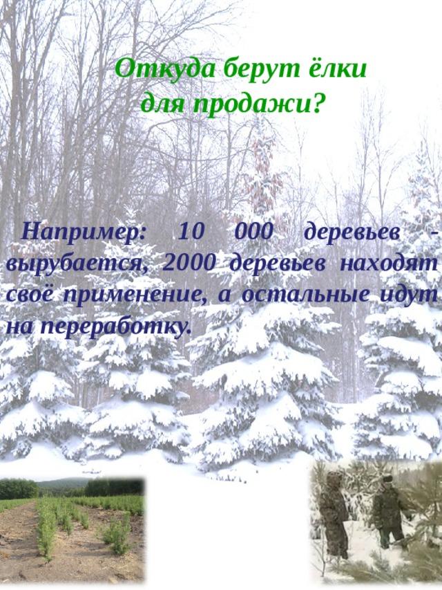 Откуда берут ёлки  для продажи?  Например: 10 000 деревьев - вырубается, 2000 деревьев находят своё применение, а остальные идут на переработку.