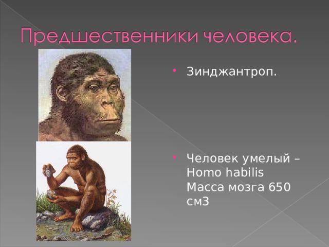 Зинджантроп.     Человек умелый – Homo habilis Масса мозга 650 см3