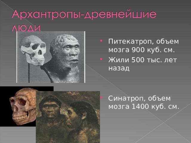 Питекатроп, объем мозга 900 куб. см. Жили 500 тыс. лет назад   Синатроп, объем мозга 1400 куб. см.