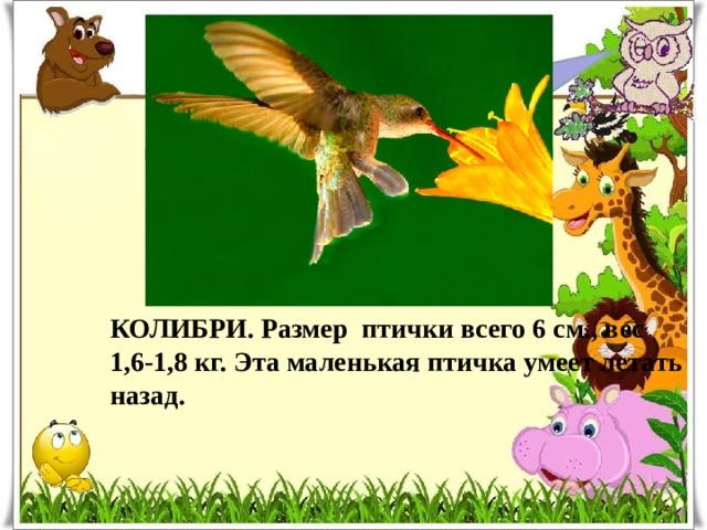 Какая птица самая маленькая? КОЛИБРИ. Размер птички всего 6 см., вес 1,6-1,8 кг. Эта маленькая птичка умеет летать назад.