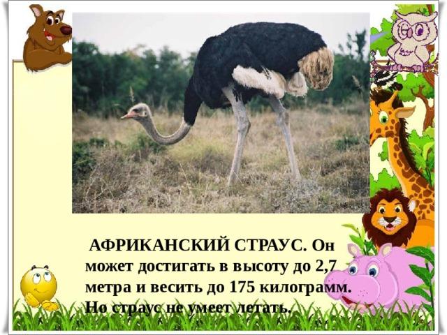 Какая птица самая большая?  АФРИКАНСКИЙ СТРАУС. Он может достигать в высоту до 2,7 метра и весить до 175 килограмм. Но страус не умеет летать.
