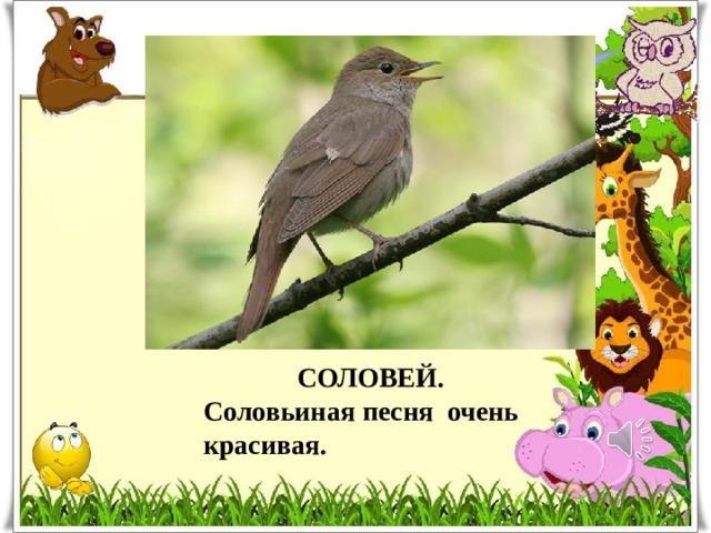 Какая птица лучше всех поёт? СОЛОВЕЙ. Соловьиная песня очень красивая.