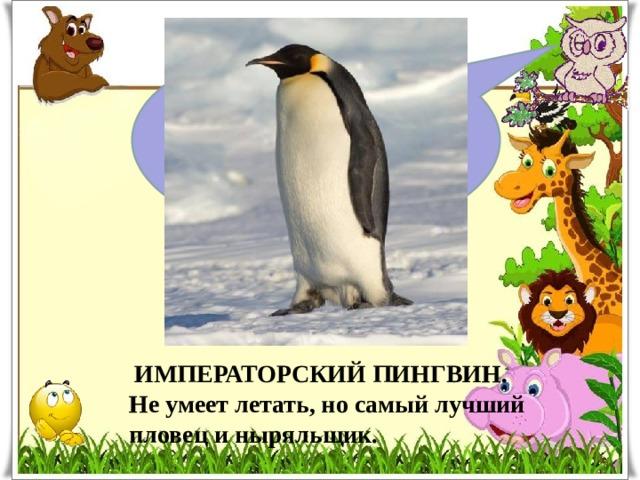 Какая птица лучше всех плавает и ныряет?  ИМПЕРАТОРСКИЙ ПИНГВИН. Не умеет летать, но самый лучший пловец и ныряльщик.