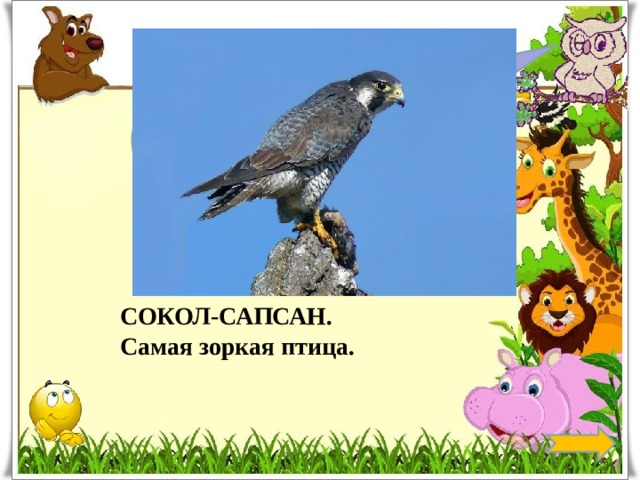 Какая птица самая зоркая? СОКОЛ-САПСАН. Самая зоркая птица.
