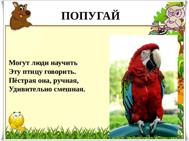 ПОПУГАЙ Могут люди научить  Эту птицу говорить.  Пёстрая она, ручная,  Удивительно смешная.