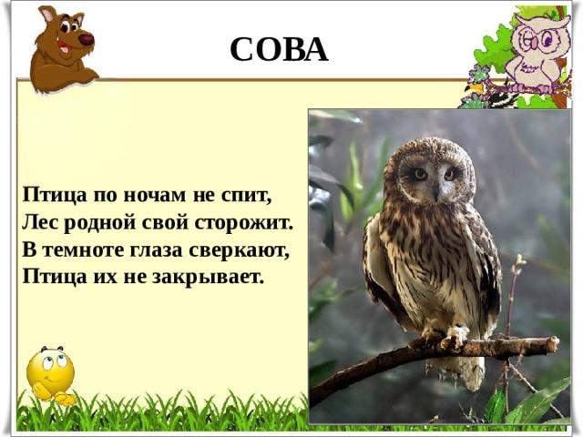 СОВА Птица по ночам не спит,  Лес родной свой сторожит.  В темноте глаза сверкают,  Птица их не закрывает.