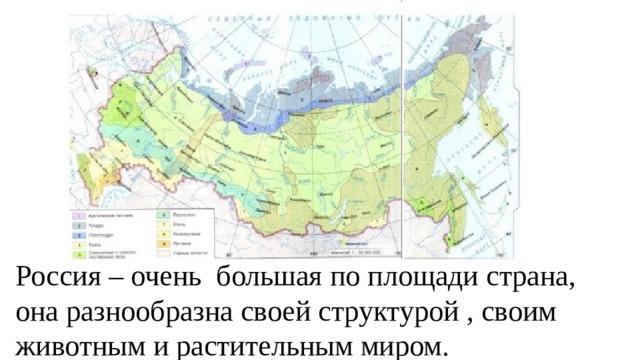 Россия – очень большая по площади страна, она разнообразна своей структурой , своим животным и растительным миром.