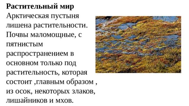 Растительный мир Арктическая пустыня лишена растительности. Почвы маломощные, с пятнистым распространением в основном только под растительность, которая состоит ,главным образом , из осок, некоторых злаков, лишайников и мхов.