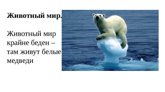 Животный мир.  Животный мир крайне беден – там живут белые медведи